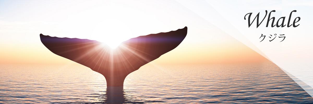 Whale クジラ